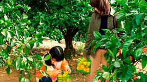蒲郡オレンジパーク イメージ