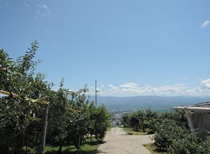 三和観光農園